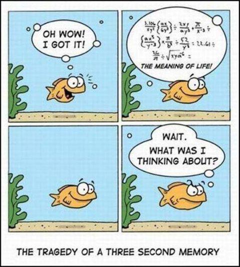 The meaning of life/ Le sens de la vie