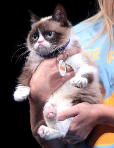 Grumpy_Cat faux amis espagnol.jpg