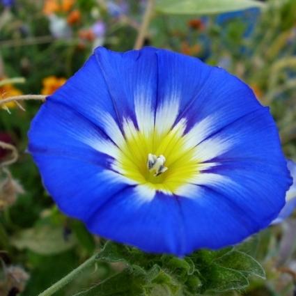 être fleur bleue.jpg