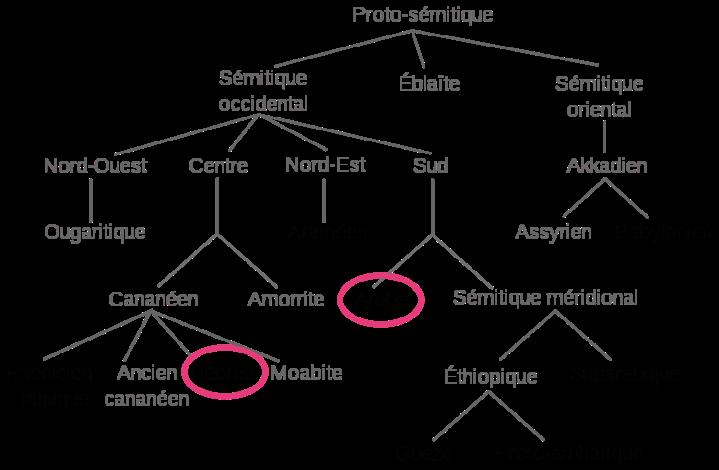 780px-Arbre_des_langues_sémitiques.svg.png